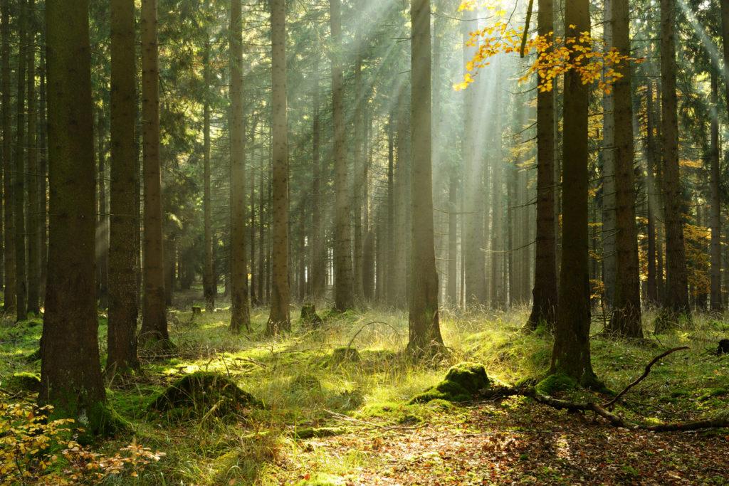 Parts de Groupement Forestier (GFF)